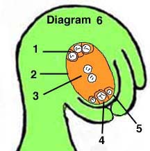 Click here to start the tutorialOvule Flower
